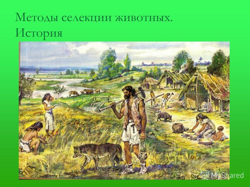 Методы селекции животных. История
