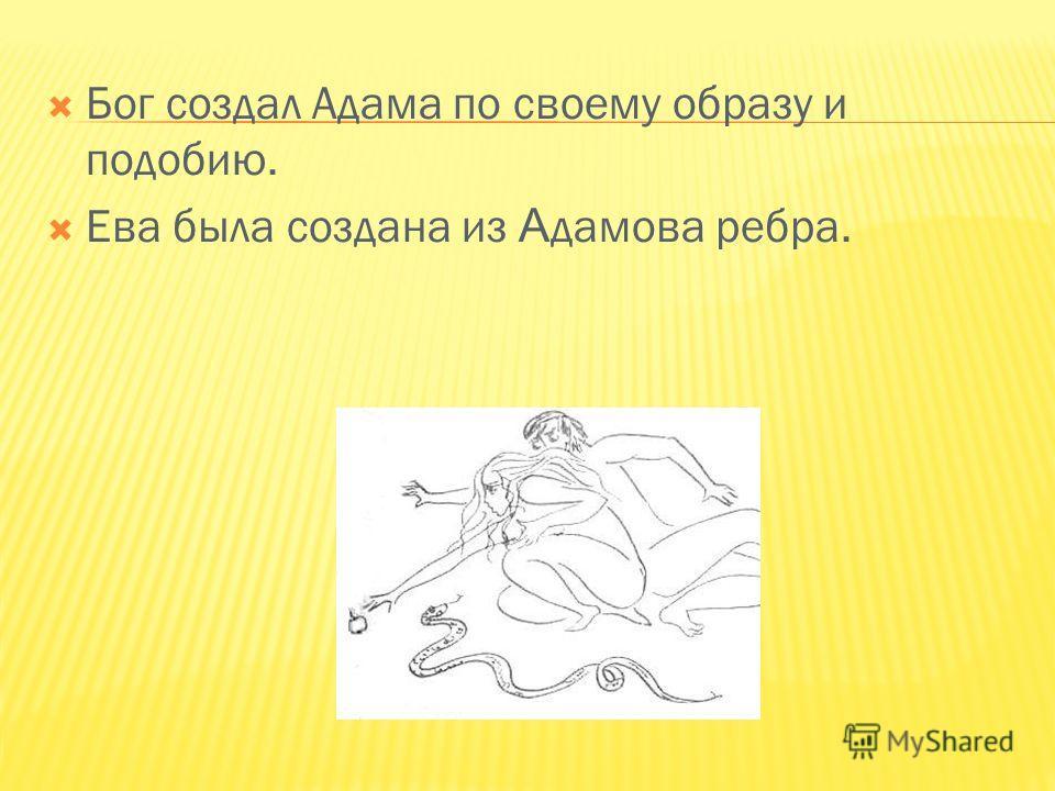 Бог создал Адама по своему образу и подобию. Ева была создана из А дамова ребра.
