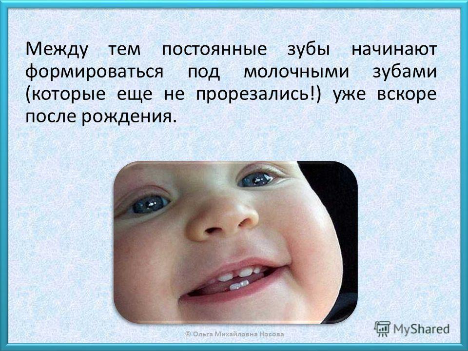 © Ольга Михайловна Носова Между тем постоянные зубы начинают формироваться под молочными зубами (которые еще не прорезались!) уже вскоре после рождения.