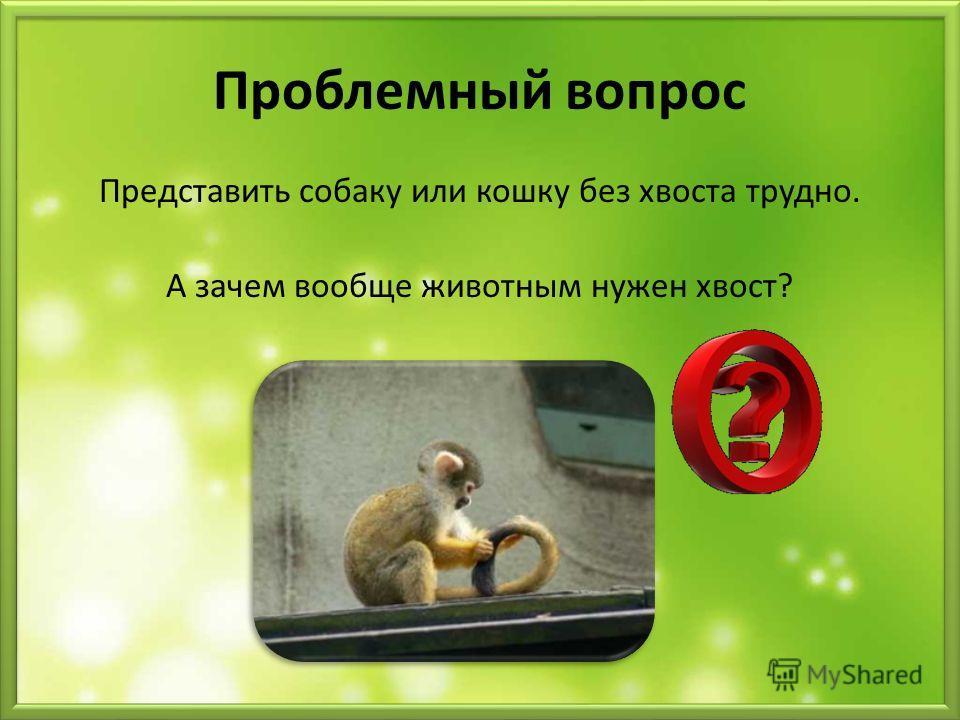 Проблемный вопрос Представить собаку или кошку без хвоста трудно. А зачем вообще животным нужен хвост?