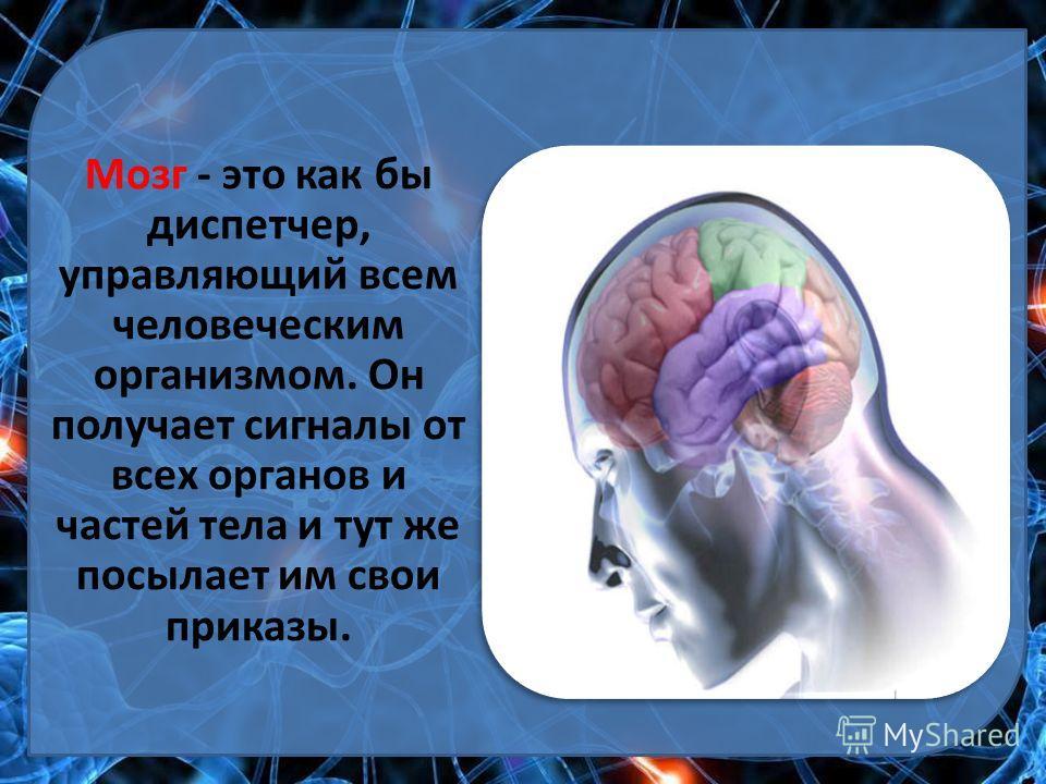 Мозг - это как бы диспетчер, управляющий всем человеческим организмом. Он получает сигналы от всех органов и частей тела и тут же посылает им свои приказы.