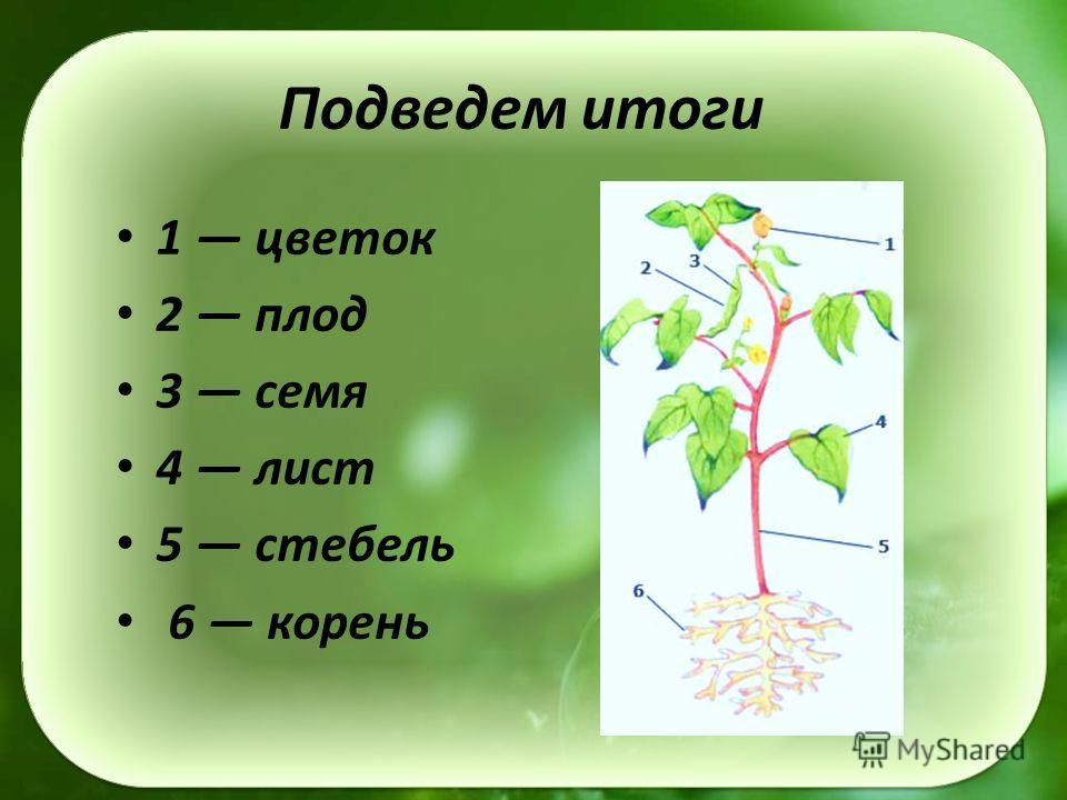 Подведем итоги 1 цветок 2 плод 3 семя 4 лист 5 стебель 6 корень