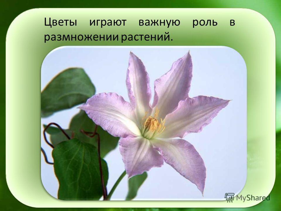 Цветы играют важную роль в размножении растений.