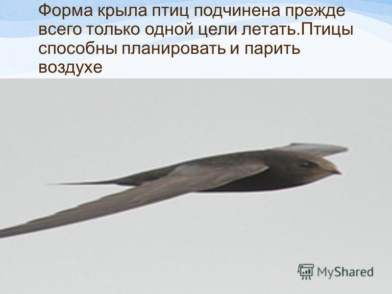 Форма крыла птиц подчинена прежде всего только одной цели летать.Птицы способны планировать и парить воздухе