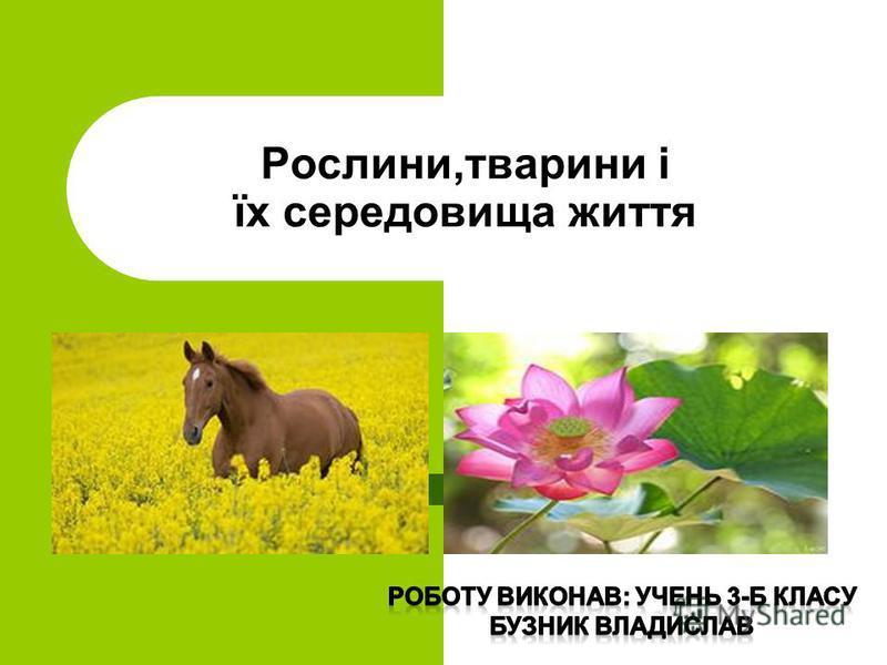 Рослини,тварини і їх середовища життя