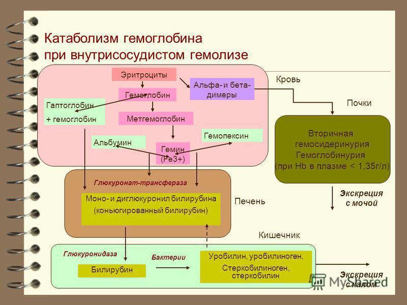 Катаболизм гемоглобина при внутрисосудистом гемолизе Гемоглобин Эритроциты Гаптоглобин + гемоглобин Метгемоглобин Гемин (Fe3+) Альбумин Гемопексин Альфа- и бета- димеры Моно- и диглюкуронил билирубина (конъюгированный билирубин) Глюкуронат-трансфераз