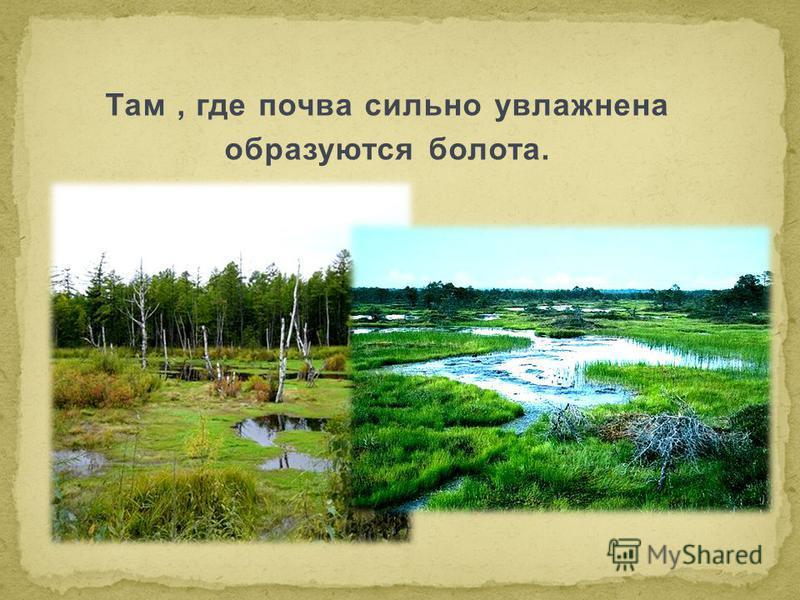 Там, где почва сильно увлажнена образуются болота.