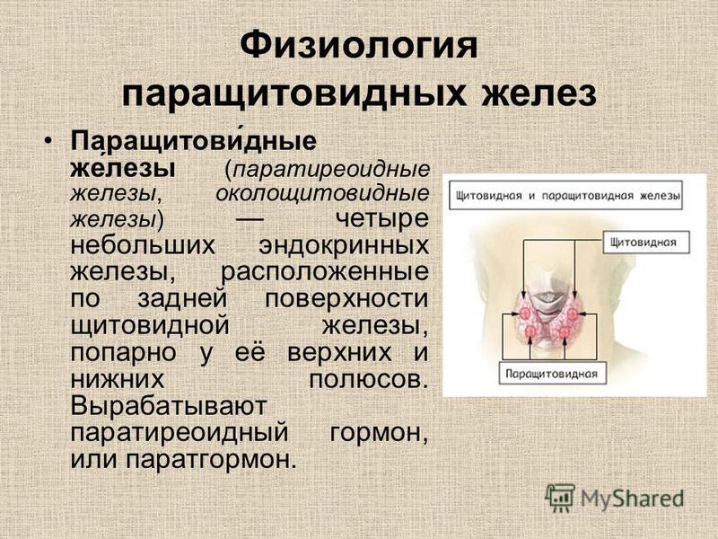 Физиология паращитовидных желез Паращитови́данные же́лезы (паратиреоиданные железы, околощитовиданные железы) четыре небольших эндокринных железы, расположенные по задней поверхности щитовидной железы, попарно у её верхних и нижних полюсов. Вырабатыв