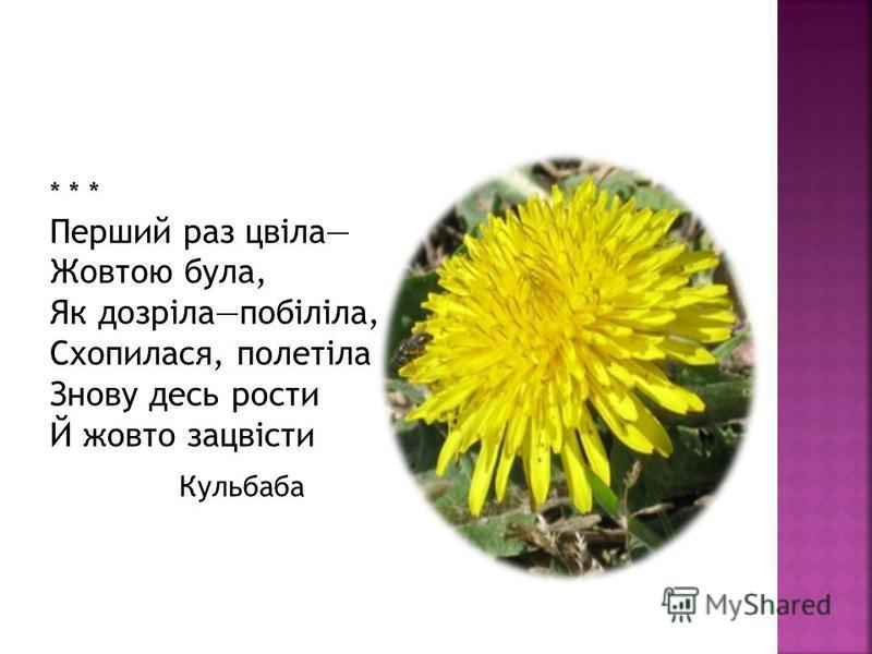 * * * Перший раз цвіла Жовтою була, Як дозрілапобіліла, Схопилася, полетіла Знову здесь расти Й жовто зацвісти Кульбаба