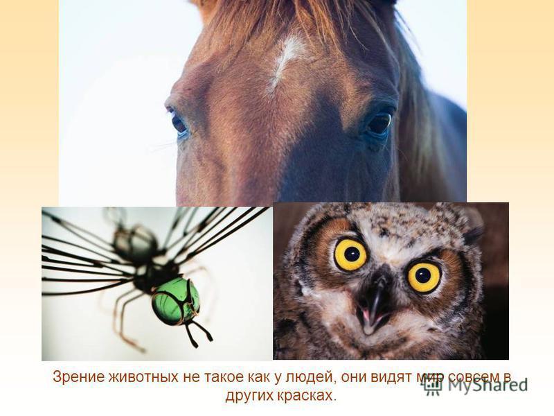 На Земле есть и такие люди, которые ничего не видят, они полностью лишены зрения - это слепые, им очень трудно получать информацию об окружающем мире, передвигаться, заниматься самообслуживанием.