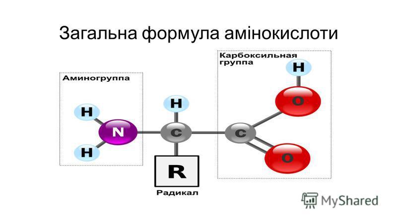 Загальна формула амінокислоти