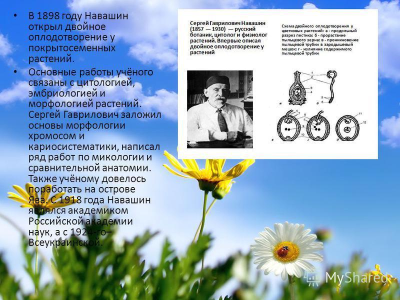 В 1898 году Навашин открыл двойное оплодотворение у покрытосеменных растений. Основные работы учёного связаны с цитологией, эмбриологией и морфологией растений. Сергей Гаврилович заложил основы морфологии хромосом и кариосистематики, написал ряд рабо