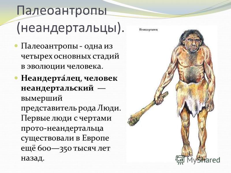 Палеоантропы (неандертальцы). Палеоантропы - одна из четырех основных стадий в эволюции человека. Неандерта́лес, человек неандертальский вымерший представитель рода Люди. Первые люди с чертами про то-неандертальца существовали в Европе ещё 600350 тыс