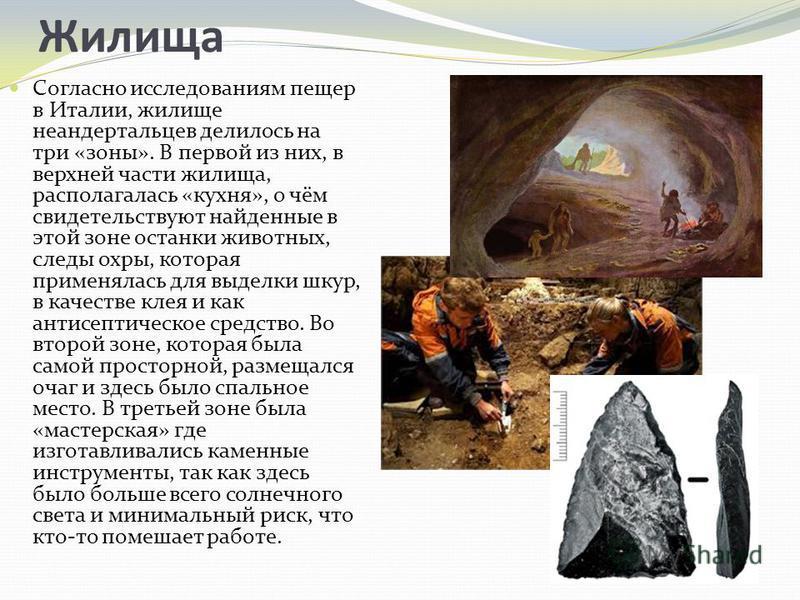 Жилища Согласно исследованиям пещер в Италии, жилище неандертальцев делилось на три «зоны». В первой из них, в верхней части жилища, располагалась «кухня», о чём свидетельствуют найденные в этой зоне останки животных, следы охры, которая применялась