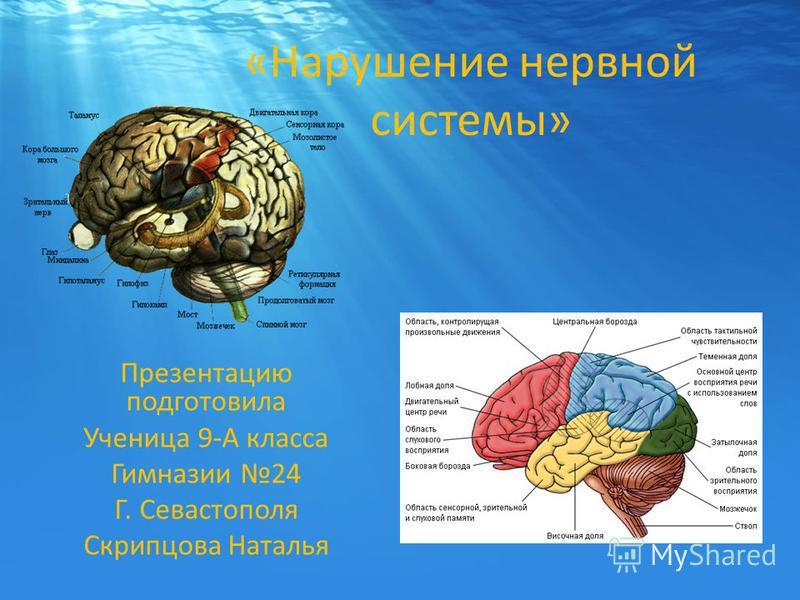 «Нарушение нервной системы» Презентацию подготовила Ученица 9-А класса Гимназии 24 Г. Севастополя Скрипцова Наталья
