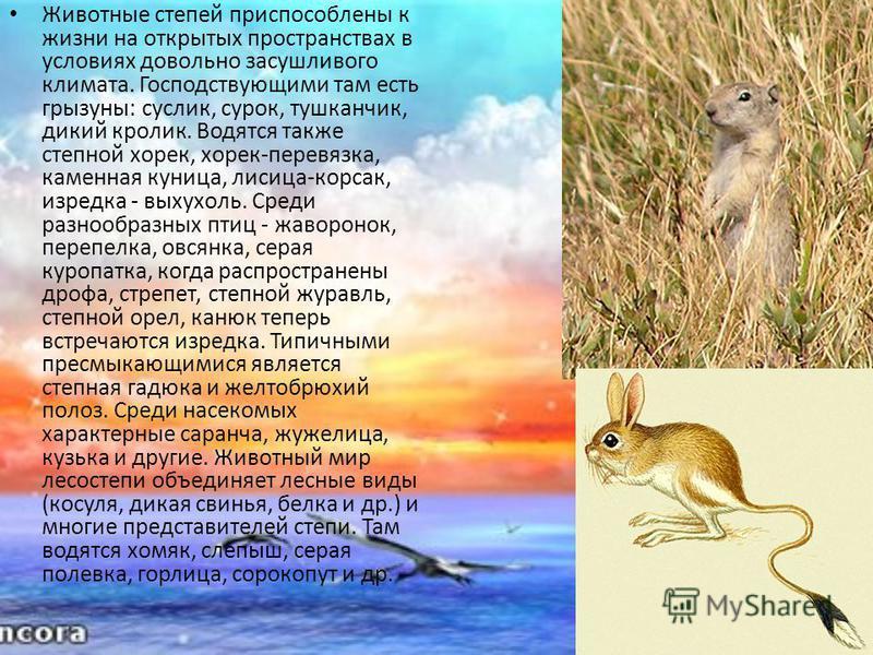 Животные степей приспособлены к жизни на открытых пространствах в условиях довольно засушливого климата. Господствующими там есть грызуны: суслик, сурок, тушканчик, дикий кролик. Водятся также степной хорек, хорек-перевязка, каменная куница, лисица-к