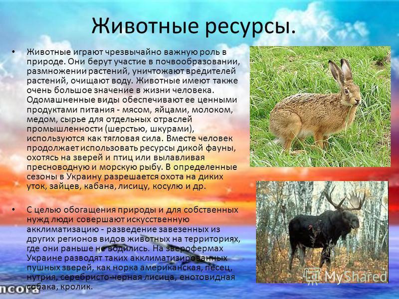 Животные ресурсы. Животные играют чрезвычайно важную роль в природе. Они берут участие в почвообразовании, размножении растений, уничтожают вредителей растений, очищают воду. Животные имеют также очень большое значение в жизни человека. Одомашненные