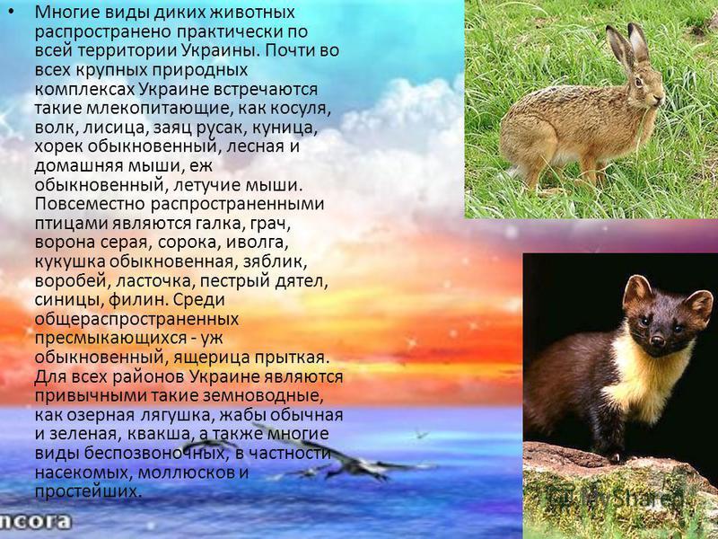 Многие виды диких животных распространено практически по всей территории Украины. Почти во всех крупных природных комплексах Украине встречаются такие млекопитающие, как косуля, волк, лисица, заяц русак, куница, хорек обыкновенный, лесная и домашняя