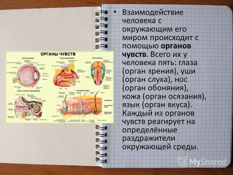 Взаимодействие человека с окружающим его миром происходит с помощью органов чувств. Всего их у человека пять: глаза (орган зрения), уши (орган слуха), нос (орган обоняния), кожа (орган осязания), язык (орган вкуса). Каждый из органов чувств реагирует