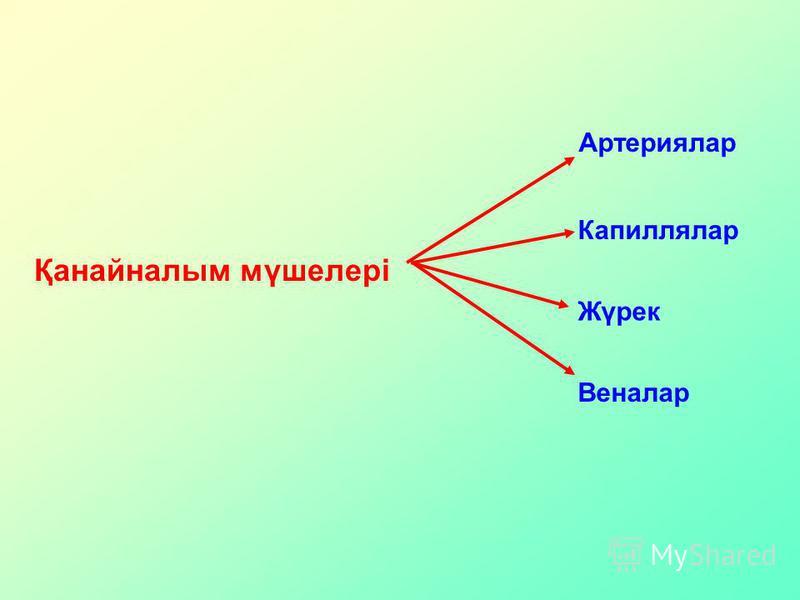 Қанайналым мүшелері Артериялар Жүрек Капиллялар Веналар
