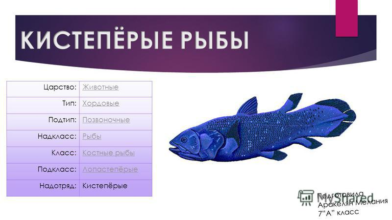 Подготовила Аракелян Мелания 7А класс Царство:Животные Тип:Хордовые Подтип:Позвоночные Надкласс:Рыбы Класс:Костные рыбы Подкласс:Лопастепёрые Надотряд:Кистепёрые