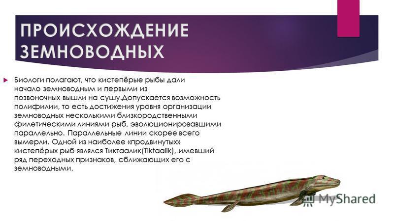 Биологи полагают, что кистепёрые рыбы дали начало земноводным и первыми из позвоночных вышли на сушу.Допускается возможность полифилии, то есть достижения уровня организации земноводных несколькими близкородственными филетическими линиями рыб, эволюц