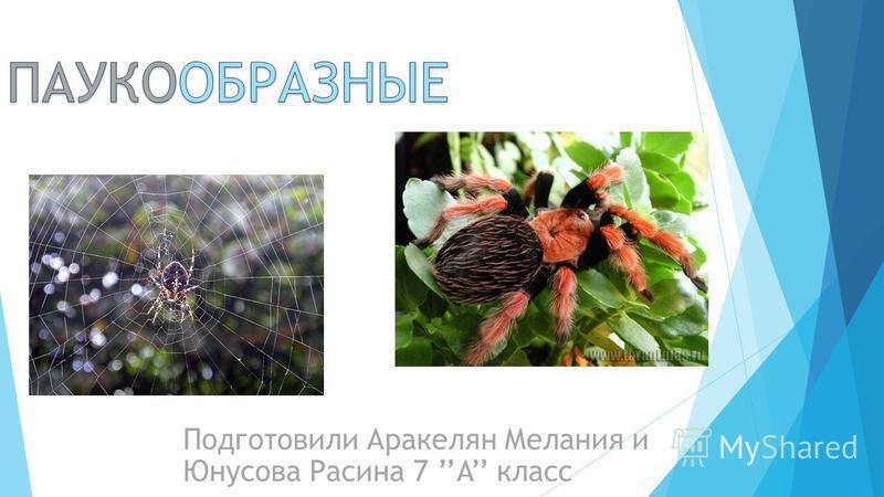 Подготовили Аракелян Мелания и Юнусова Расина 7 A класс