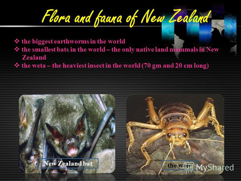 Flora and fauna of New Zealand the biggest earthworms in the world the smallest bats in the world – the only native land mammals in New Zealand the weta – the heaviest insect in the world (70 gm and 20 cm long) the weta New Zealand bat