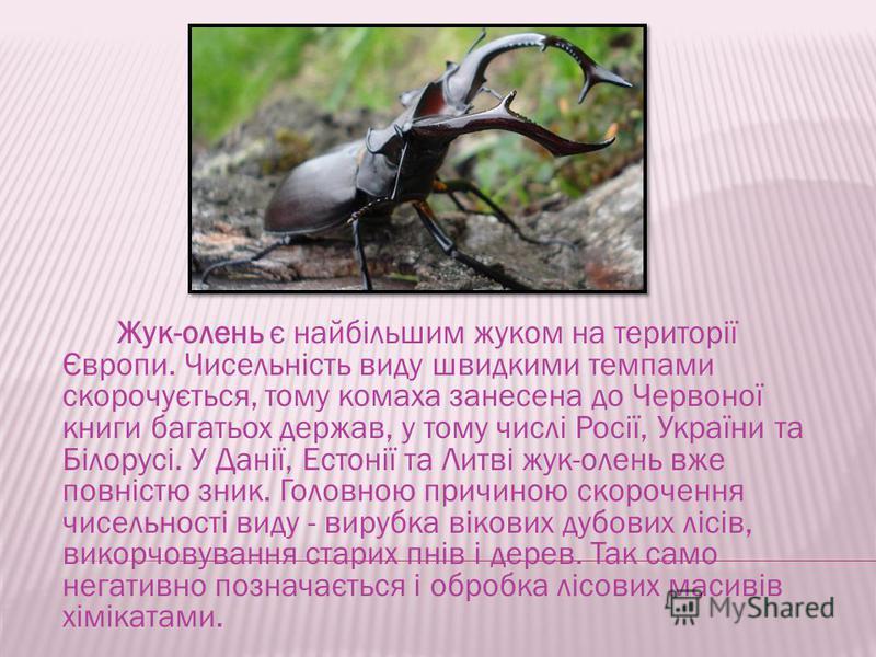 Жук-олень є найбільшим жуком на території Європи. Чисельність виду шведскими темпами скорочується, тому комаха занесена до Червоної книги багатьох держав, у тому числі Росії, України та Білорусі. У Данії, Естонії та Литві жук-олень вже повністю знак.