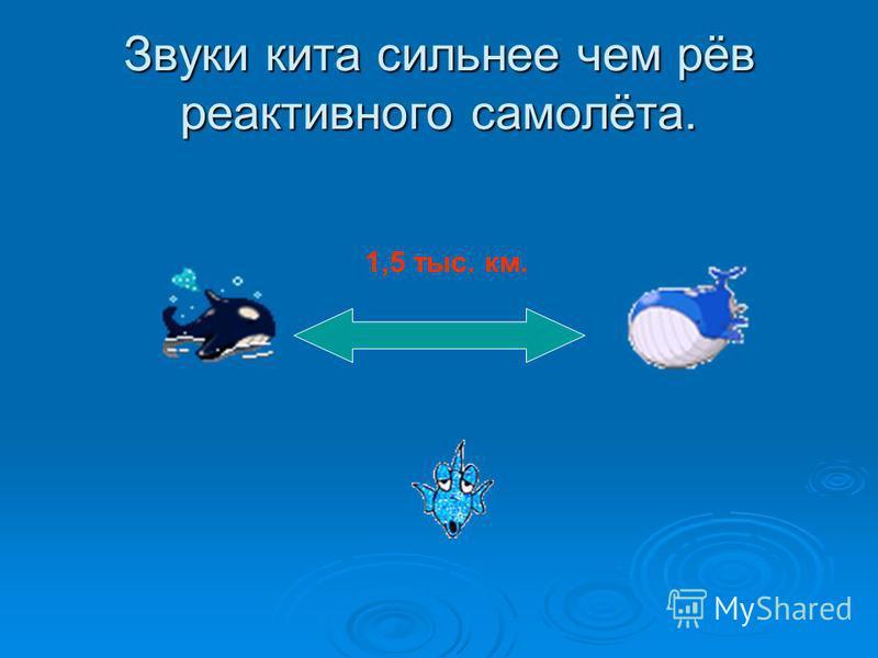 Звуки кита сильнее чем рёв реактивного самолёта. 1,5 тыс. км.