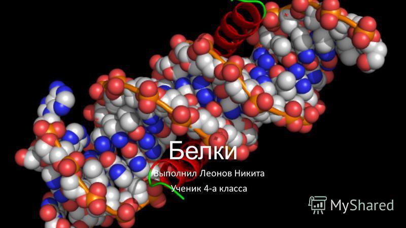Белки Выполнил Леонов Никита Ученик 4-а класса