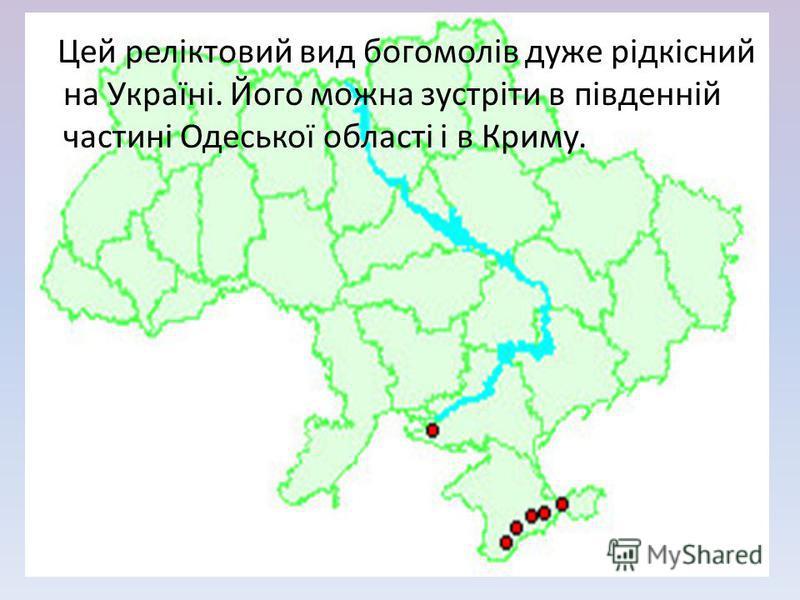 Цей реліктовий вид богомолів даже рідкісний на Україні. Його можна зустріти в південній частині Одеської області і в Криму.
