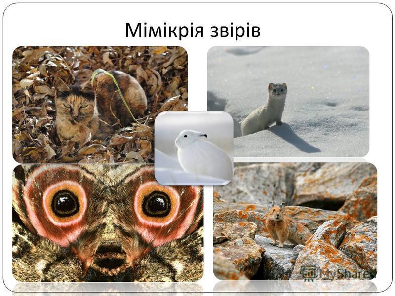 Мімікрія звірів