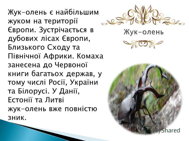 Жук-олень є найбільшим жуком на території Європи. Зустрічається в дубовых лісах Європи, Близького Сходу та Північної Африки. Комаха занесена до Червоної книги багатьох держав, у тому числі Росії, України та Білорусі. У Данії, Естонії та Литві жук-оле
