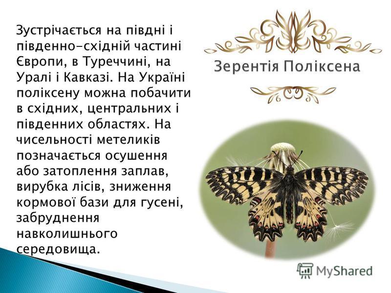 Зустрічається на півдні і південно-східній частині Європи, в Туреччині, на Уралі і Кавказі. На Україні поліксену можна побачити в східних, центральных і південних областях. На чисельності метеликів позначається осушения обо затопления заплав, вирубка