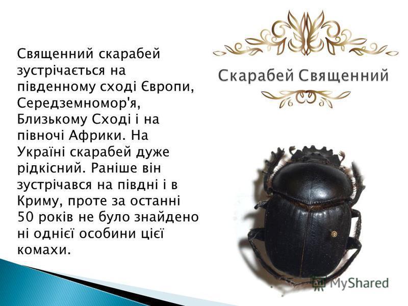 Священний скарабей зустрічається на південному сході Європи, Середземномор'я, Близькому Сході і на півночі Африки. На Україні скарабей даже рідкісний. Раніше він зустрічався на півдні і в Криму, проте за останні 50 років не було знайдено ні однієї ос