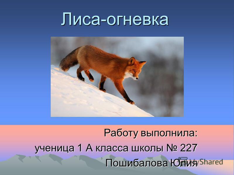 Лиса-огневка Работу выполнила: ученица 1 А класса школы 227 Пошибалова Юлия