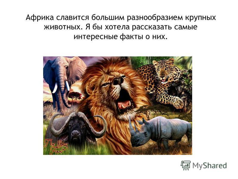 Африка славится большим разнообразием крупных животных. Я бы хотела рассказать самые интересные факты о них.