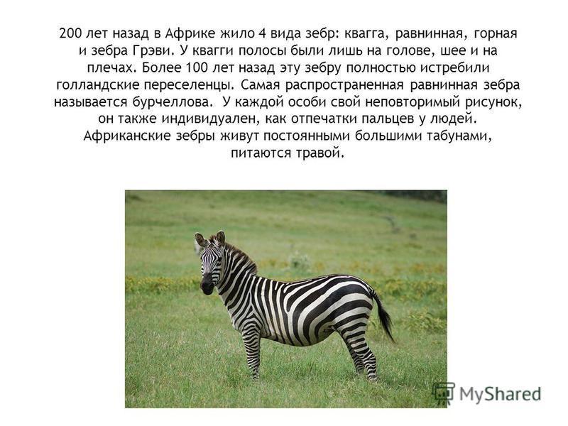 Презентация на тему Животные Африки класс Скачать бесплатно  4 200