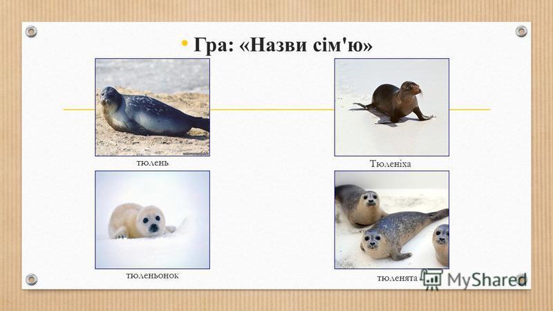 Гра: «Назви сім'ю » тюлень тюленьонок Тюленіха тюленята