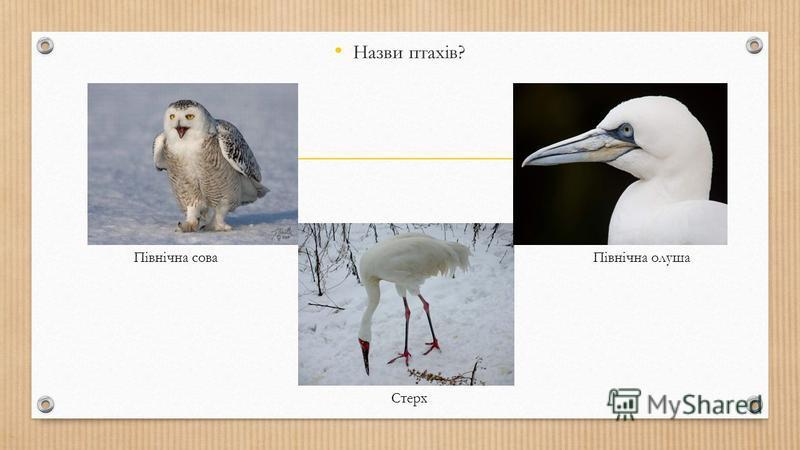 Назви птахів? Північна сова Стерх Північна олуша
