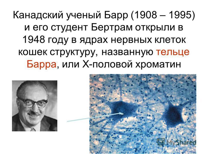 Канадский ученый Барр (1908 – 1995) и его студент Бертрам открыли в 1948 году в ядрах нервных клеток кошек структуру, названную тельце Барра, или Х-половой хроматин