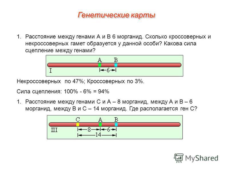 Генетические карты 1. Расстояние между генами А и В 6 морганид. Сколько кроссоверных и некроссоверных гамет образуется у данной особи? Какова сила сцепление между генами? Некроссоверных по 47%; Кроссоверных по 3%. Сила сцепления: 100% - 6% = 94% 1. Р