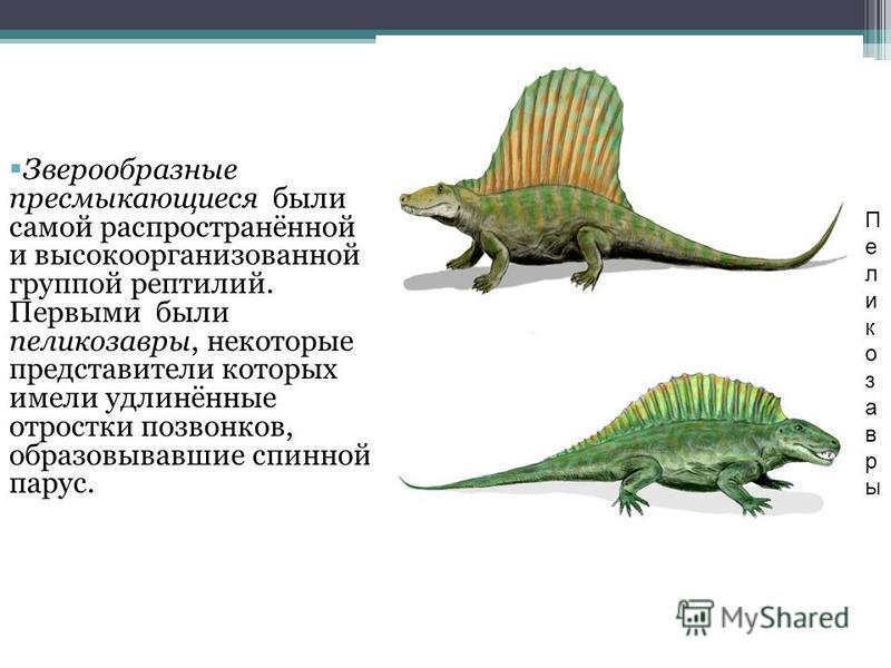 Зверообразные пресмыкающиеся были самой распространённой и высокоорганизованной группой рептилий. Первыми были пеликозавры, некоторые представители которых имели удлинённые отростки позвонков, образовывавшие спинной парус. Пеликозавры Пеликозавры