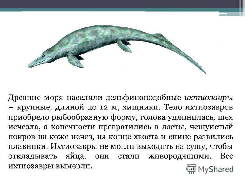 Древние моря населяли дельфина подобные ихтиозавры – крупные, длиной до 12 м, хищники. Тело ихтиозавров приобрело рыбообразную форму, голова удлинилась, шея исчезла, а конечности превратились в ласты, чешуистый покров на коже исчез, на конце хвоста и