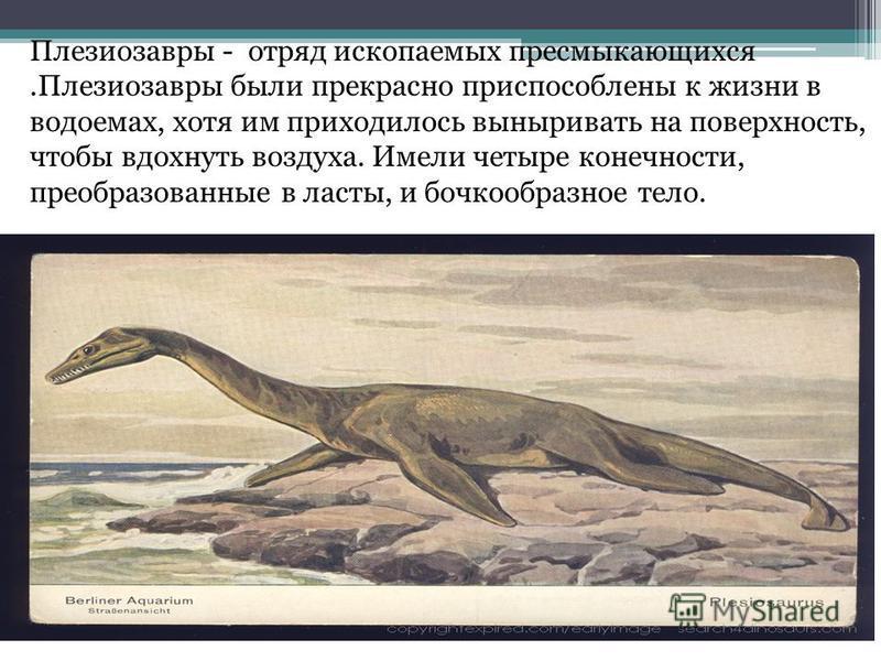 Плезиозавры - отряд ископаемых пресмыкающихся.Плезиозавры были прекрасно приспособлены к жизни в водоемах, хотя им приходилось выныривать на поверхность, чтобы вдохнуть воздуха. Имели четыре конечности, преобразованные в ласты, и бочкообразное тело.