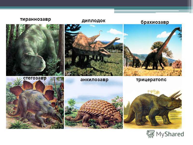 тираннозавр диплодок брахиозавр стегозавр анкилозавр трицератопс