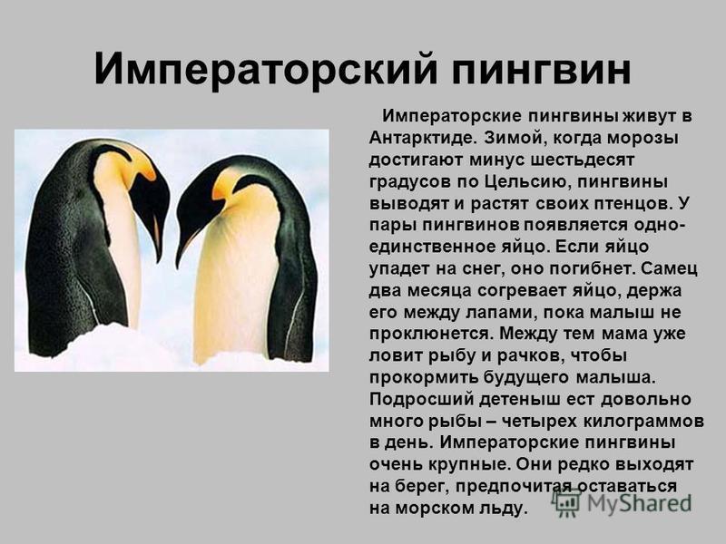На серых страницах записаны названия животных, которые до сих пор мало изучены.Места их обитания труднодоступны или точно не установлены.