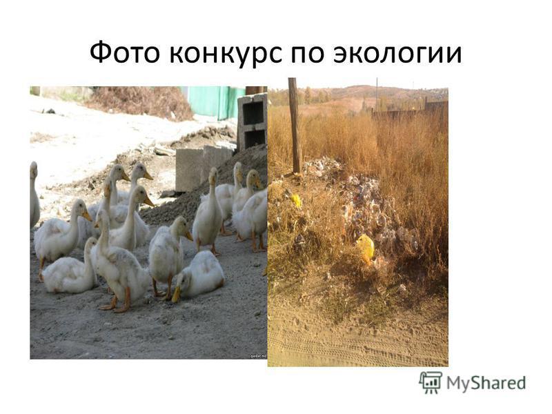 Фото конкурс по экологии