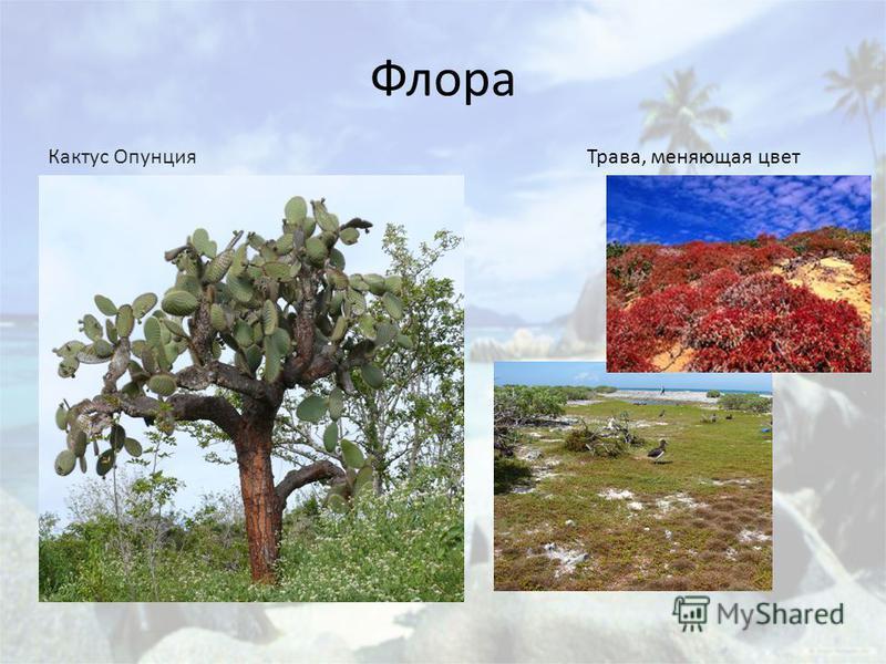 Флора Кактус Опунция Трава, меняющая цвет
